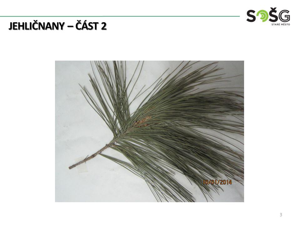 JEHLIČNANY – ČÁST 2 Borovice černá – Pinus Nigra – BO 20-40 m vysoká Přímý válcovitý kmen Jehlice po 2 ve svazku, tmavě zelené 5-17cm dlouhé Šišky vejčité Od mládí černá borka 4