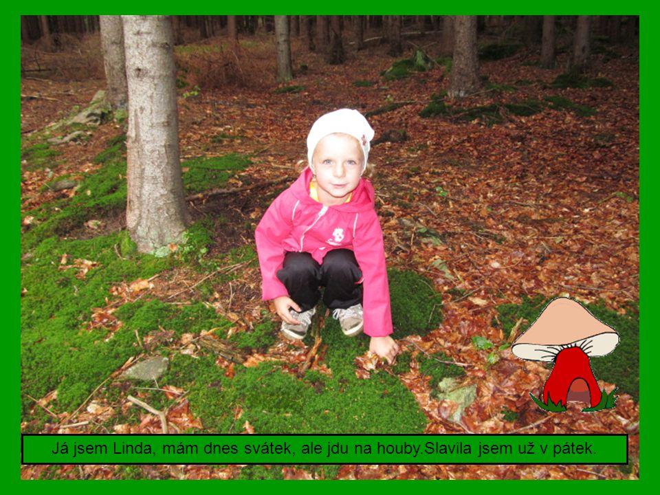 Přijeďte na Přebudov o víkendech na houby i na brigádu na tábořiště. Foto:M.Dvořák
