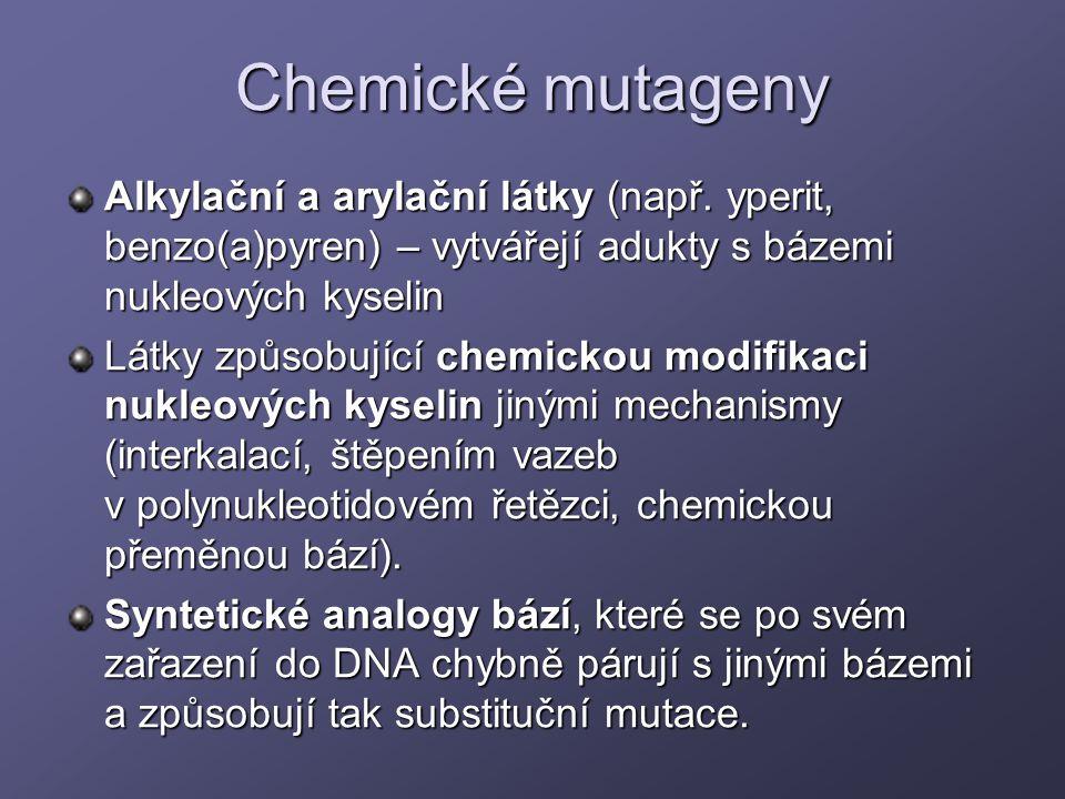Chemické mutageny Alkylační a arylační látky (např. yperit, benzo(a)pyren) – vytvářejí adukty s bázemi nukleových kyselin Látky způsobující chemickou