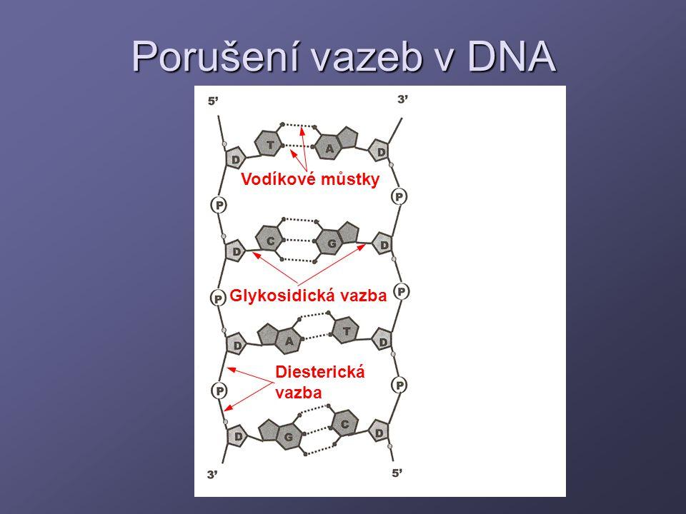 Porušení vazeb v DNA Vodíkové můstky Glykosidická vazba Diesterická vazba
