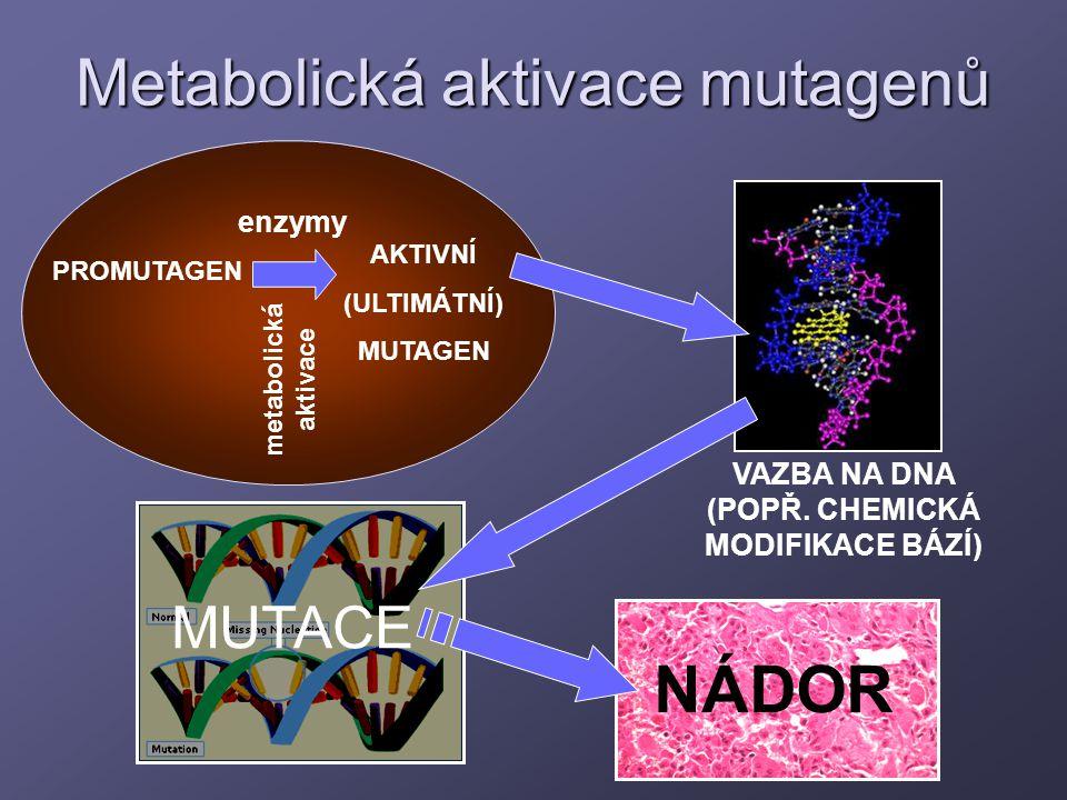 Metabolická aktivace mutagenů PROMUTAGEN AKTIVNÍ (ULTIMÁTNÍ) MUTAGEN VAZBA NA DNA (POPŘ. CHEMICKÁ MODIFIKACE BÁZÍ) MUTACE enzymy metabolická aktivace
