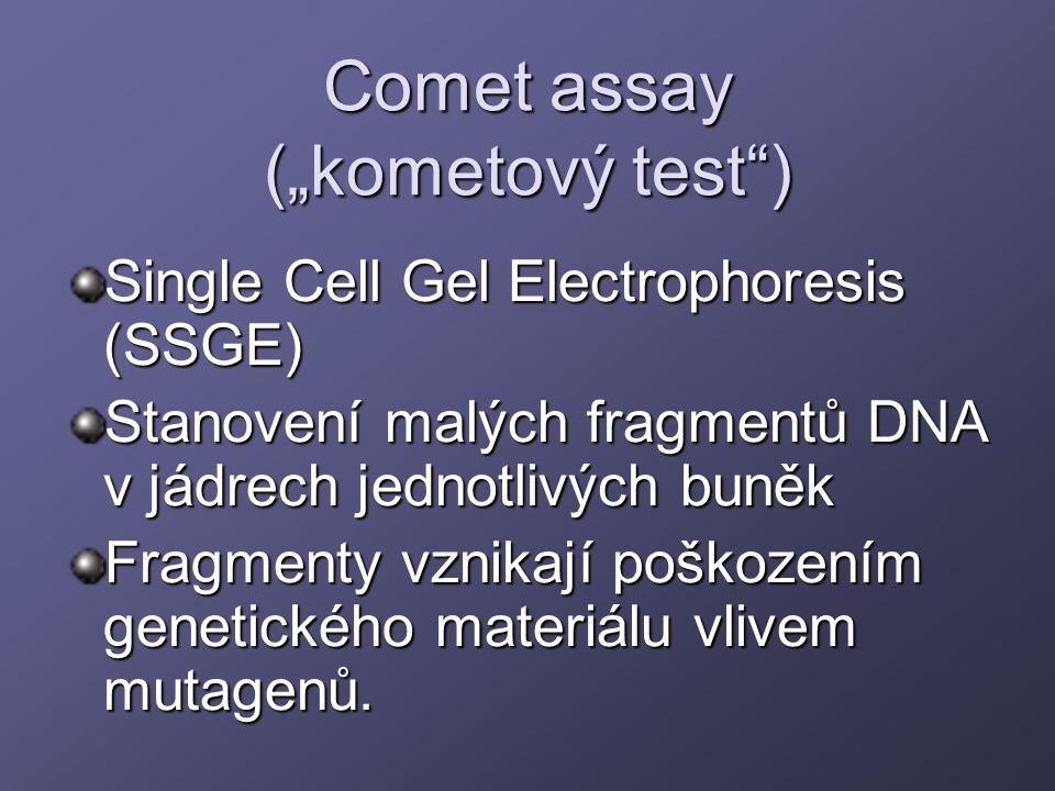 """Comet assay (""""kometový test"""") Single Cell Gel Electrophoresis (SSGE) Stanovení malých fragmentů DNA v jádrech jednotlivých buněk Fragmenty vznikají po"""