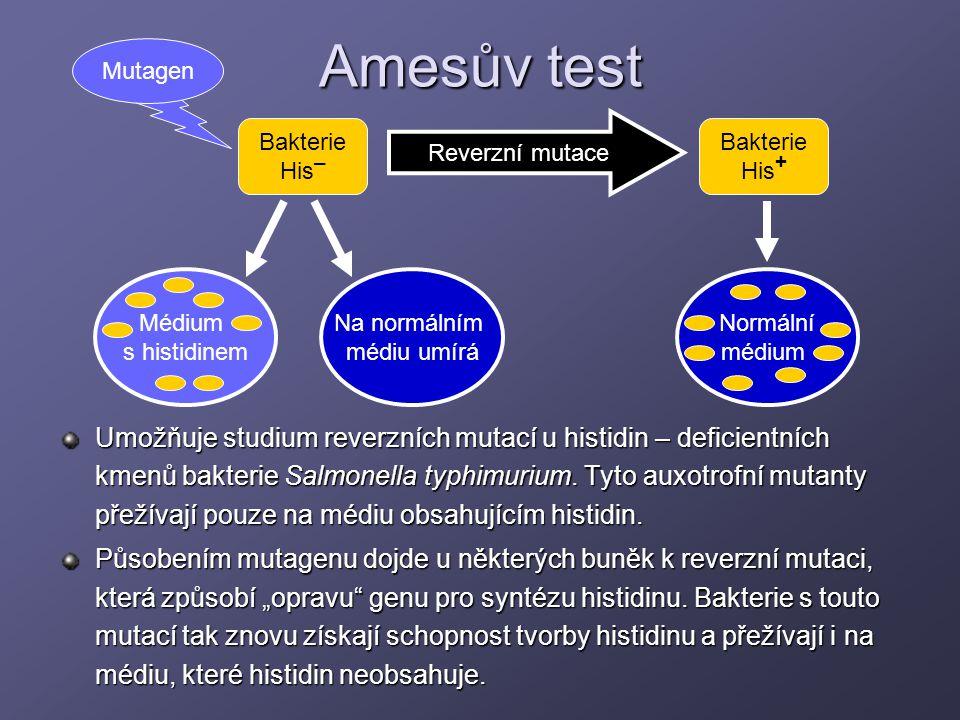 Amesův test Umožňuje studium reverzních mutací u histidin – deficientních kmenů bakterie Salmonella typhimurium. Tyto auxotrofní mutanty přežívají pou