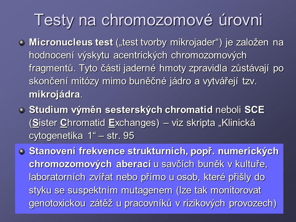"""Testy na chromozomové úrovni Micronucleus test (""""test tvorby mikrojader"""") je založen na hodnocení výskytu acentrických chromozomových fragmentů. Tyto"""