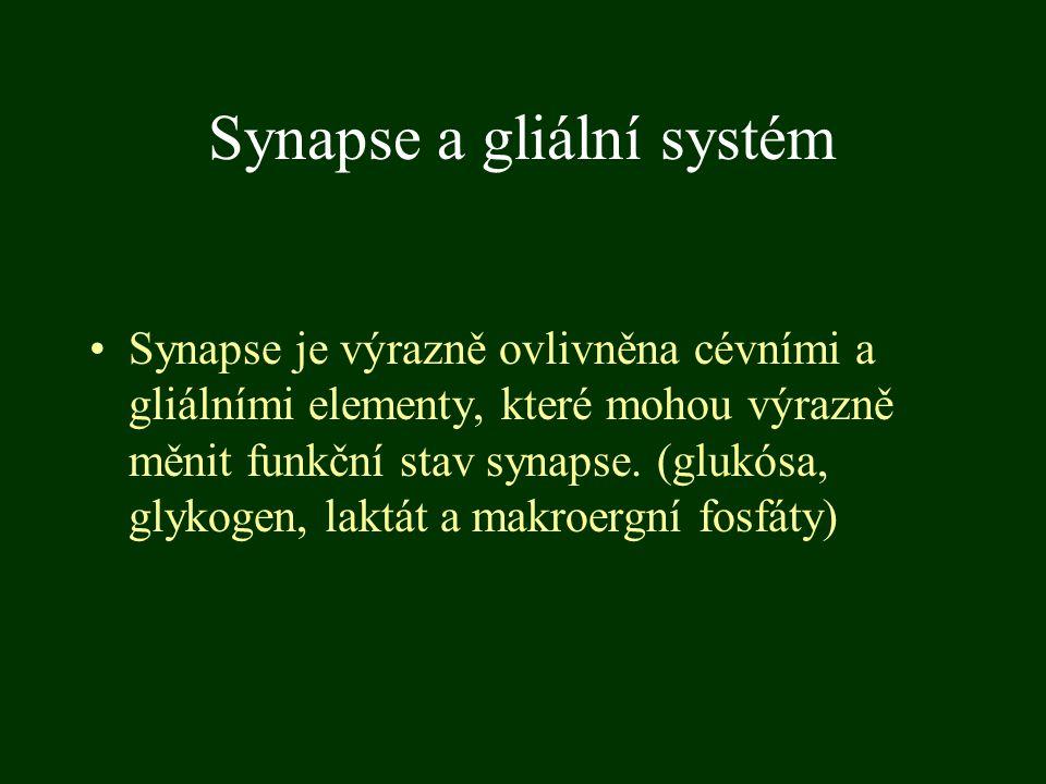 Synapse a gliální systém Synapse je výrazně ovlivněna cévními a gliálními elementy, které mohou výrazně měnit funkční stav synapse. (glukósa, glykogen