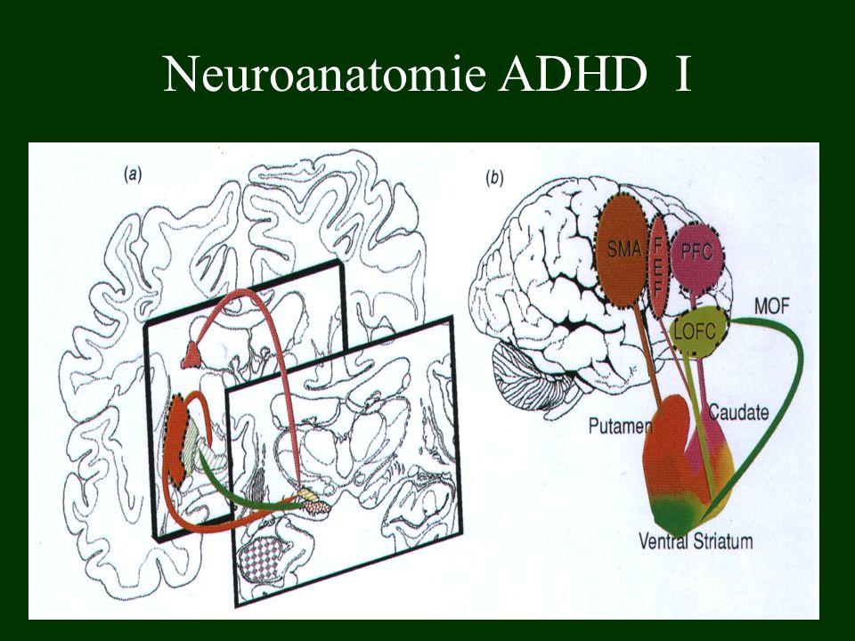 Neuroanatomie ADHD I