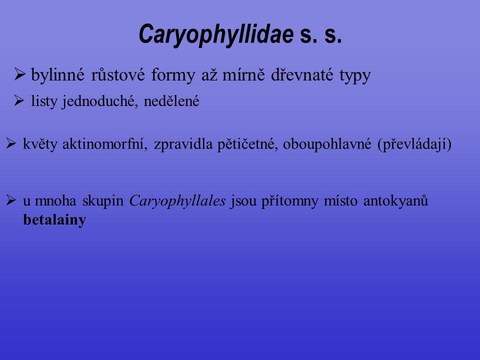 Caryophyllidae s. s.  bylinné růstové formy až mírně dřevnaté typy  listy jednoduché, nedělené  květy aktinomorfní, zpravidla pětičetné, oboupohlav