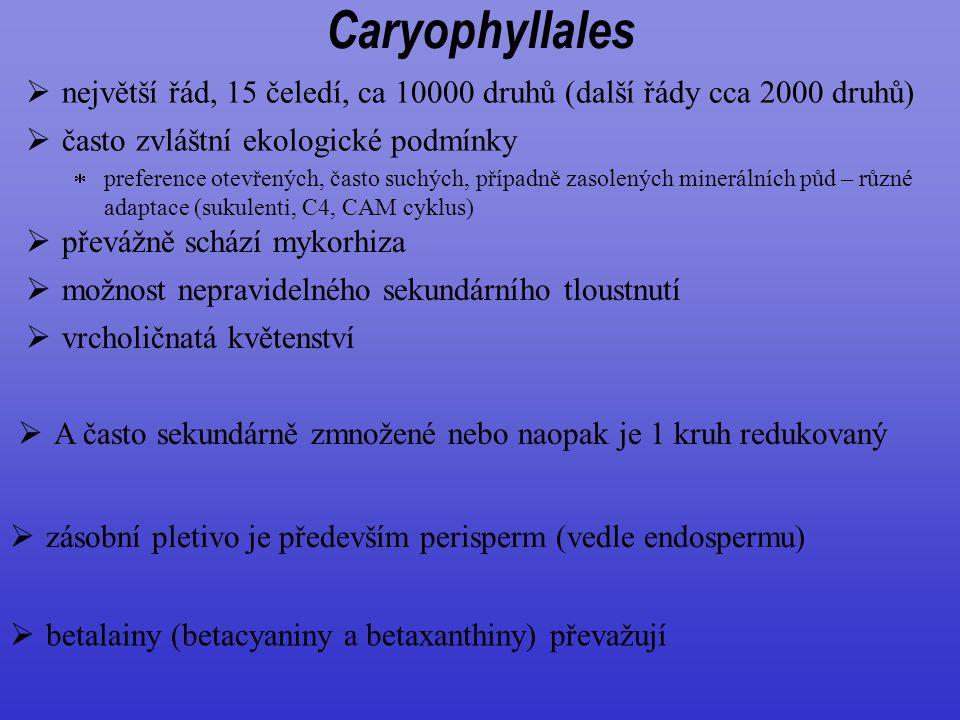 Caryophyllales  největší řád, 15 čeledí, ca 10000 druhů (další řády cca 2000 druhů)  A často sekundárně zmnožené nebo naopak je 1 kruh redukovaný 