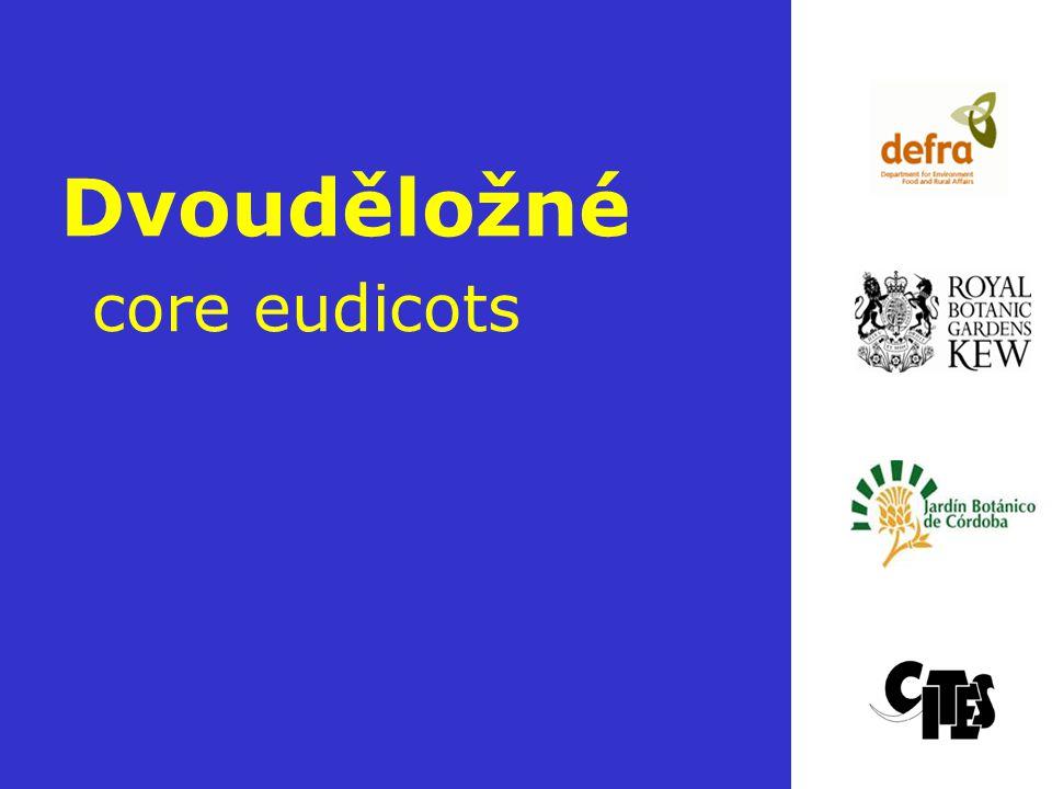 Rosopsida Liliopsida Magnoliopsida Rosopsida bazální Eurosids I Eurosids II Core Eudocots Rosids