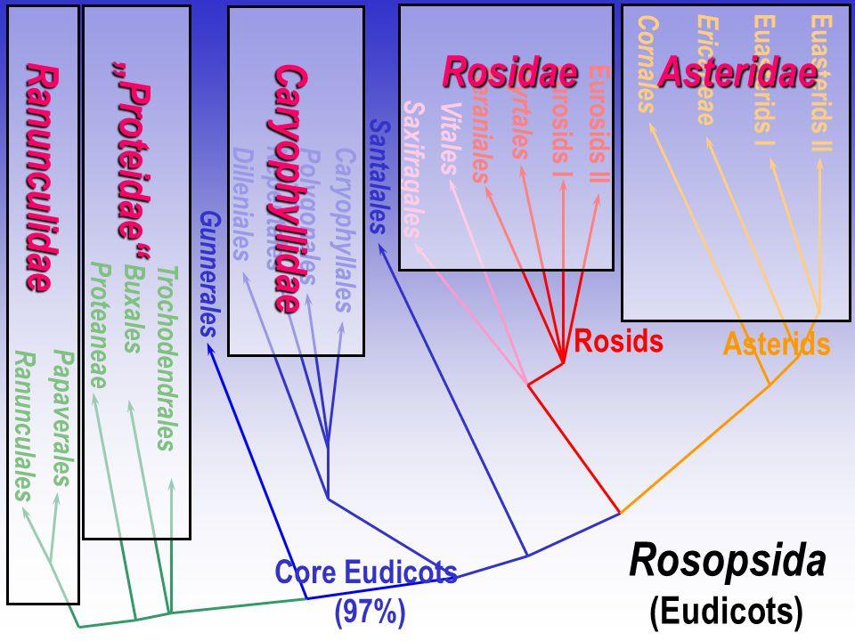 Core Eudicots