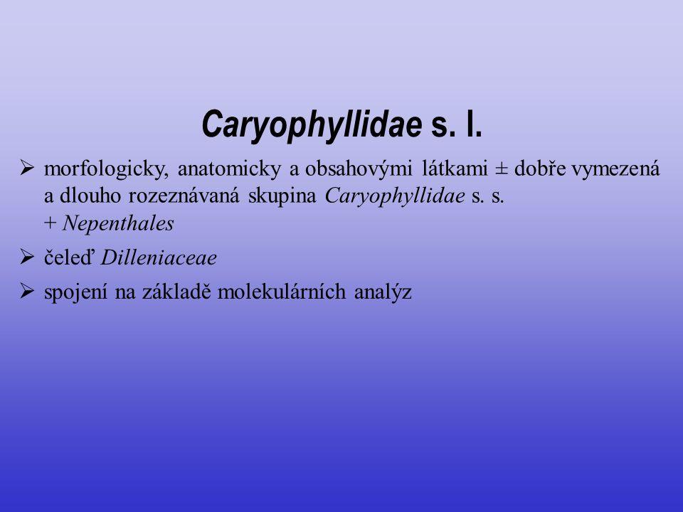  morfologicky, anatomicky a obsahovými látkami ± dobře vymezená a dlouho rozeznávaná skupina Caryophyllidae s. s. + Nepenthales  čeleď Dilleniaceae