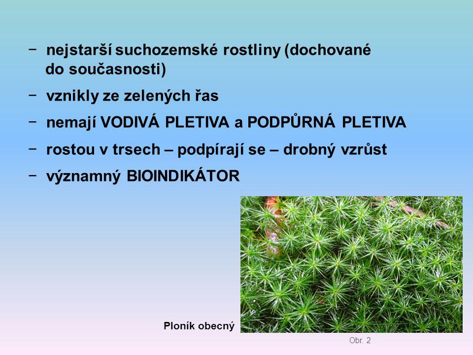 − nejstarší suchozemské rostliny (dochované do současnosti) − vznikly ze zelených řas − nemají VODIVÁ PLETIVA a PODPŮRNÁ PLETIVA − rostou v trsech – p