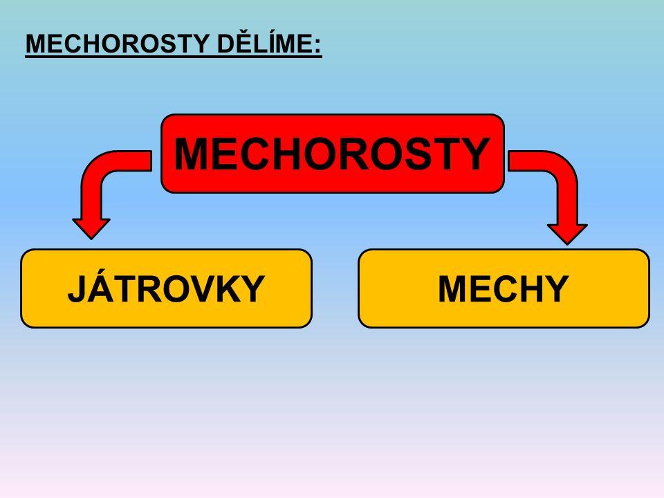 MECHOROSTY DĚLÍME: MECHOROSTY MECHYJÁTROVKY