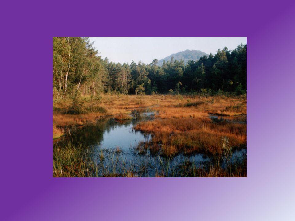 Flora-Z lokality je uváděn výskyt více než 170 druhů řas Fauna-Ze zvláště chráněných živočišných druhů byli pozorování bukač velký moták pochop, bekasina otavní a ledňáček říční.