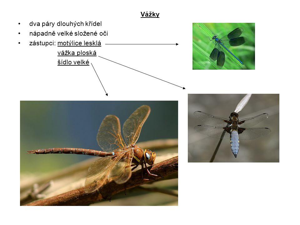 Vážky dva páry dlouhých křídel nápadně velké složené oči zástupci: motýlice lesklá vážka ploská šídlo velké