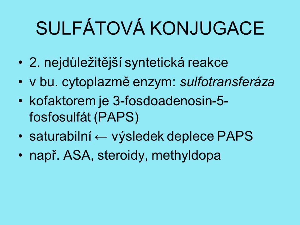 SULFÁTOVÁ KONJUGACE 2. nejdůležitější syntetická reakce v bu. cytoplazmě enzym: sulfotransferáza kofaktorem je 3-fosdoadenosin-5- fosfosulfát (PAPS) s