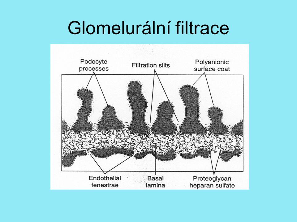 Glomelurální filtrace