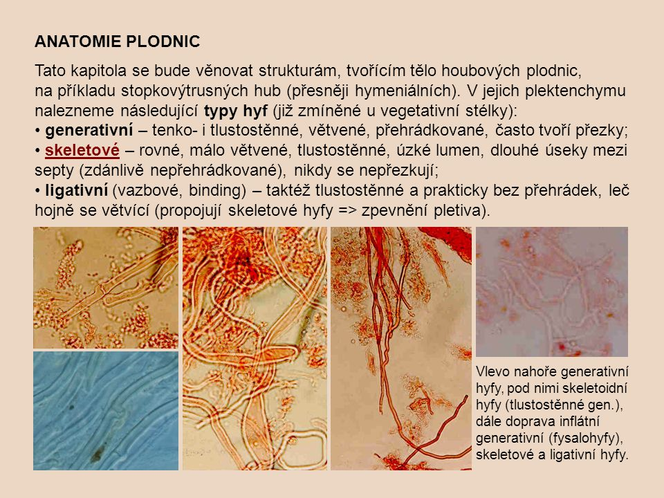 ANATOMIE PLODNIC Tato kapitola se bude věnovat strukturám, tvořícím tělo houbových plodnic, na příkladu stopkovýtrusných hub (přesněji hymeniálních).