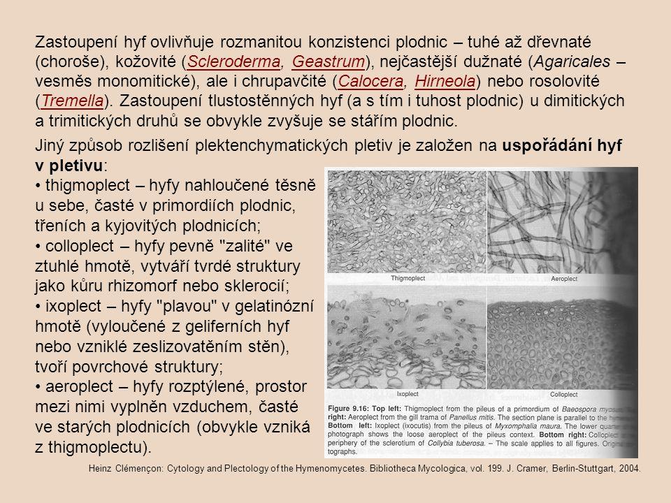 Zastoupení hyf ovlivňuje rozmanitou konzistenci plodnic – tuhé až dřevnaté (choroše), kožovité (Scleroderma, Geastrum), nejčastější dužnaté (Agaricale