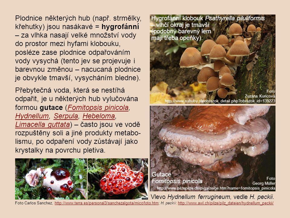 Plodnice některých hub (např. strmělky, křehutky) jsou nasákavé = hygrofánní – za vlhka nasají velké množství vody do prostor mezi hyfami klobouku, po