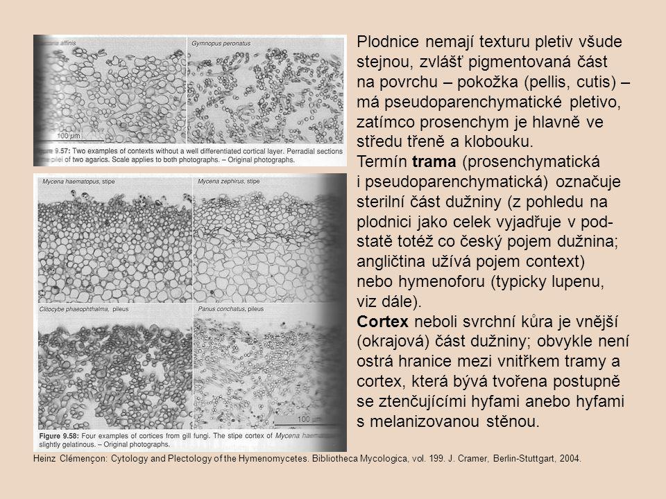 Povrch plodnic (nad cortex) obvykle pokrývá pokožka = pellis (pileipellis na klobouku, stipitipellis na třeni, příp.