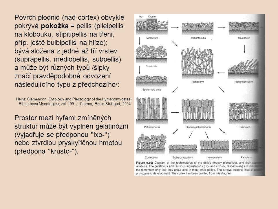 tomentum (plsť – tlustý obal z nepravidelně uspořádaných hyf; Xerocomus) => clavicutis (kyjovité ztlustlé buňky na koncích hyf; Gymnopus dryophilus) => epidermální cutis (kompaktní hmota z obdélníkových buněk, častá ve sklerociích, příklad Typhula); Heinz Clémençon: Cytology and Plectology of the Hymenomycetes.