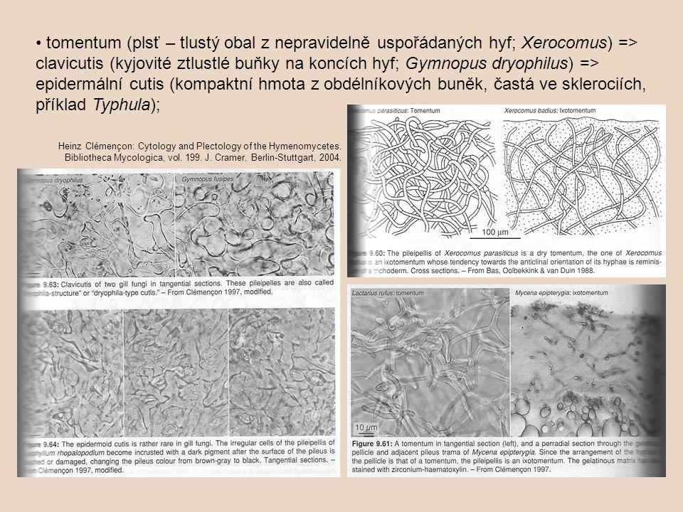 tomentum (plsť – tlustý obal z nepravidelně uspořádaných hyf; Xerocomus) => clavicutis (kyjovité ztlustlé buňky na koncích hyf; Gymnopus dryophilus) =