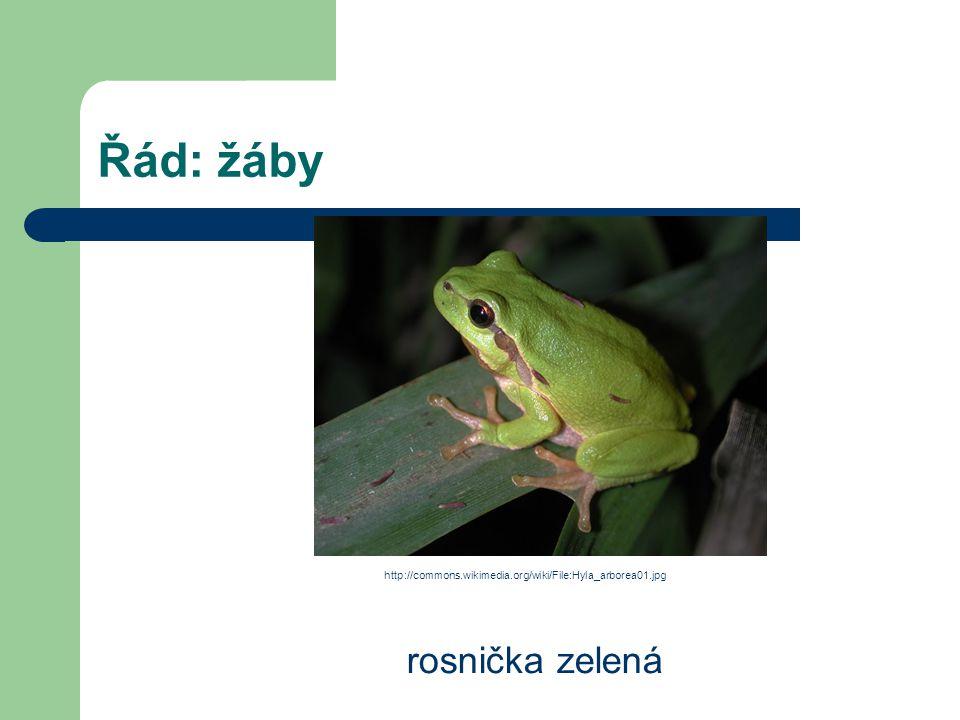 Řád: žáby rosnička zelená http://commons.wikimedia.org/wiki/File:Hyla_arborea01.jpg