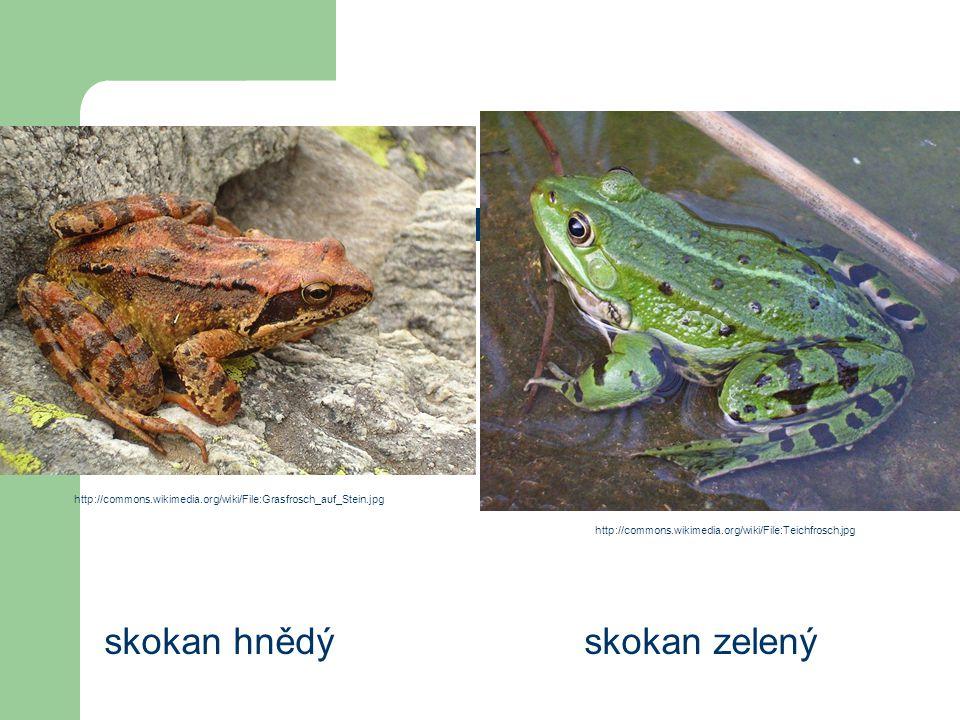 Řád: žáby skokan hnědýskokan zelený http://commons.wikimedia.org/wiki/File:Grasfrosch_auf_Stein.jpg http://commons.wikimedia.org/wiki/File:Teichfrosch
