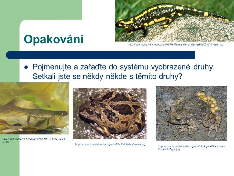 Opakování Pojmenujte a zařaďte do systému vyobrazené druhy. Setkali jste se někdy někde s těmito druhy? http://commons.wikimedia.org/wiki/File:AlytesO
