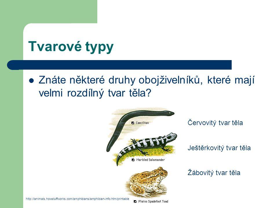 Dýchací soustava V larválním stádiu dýchají žábrami (larvy žijí ve vodě).