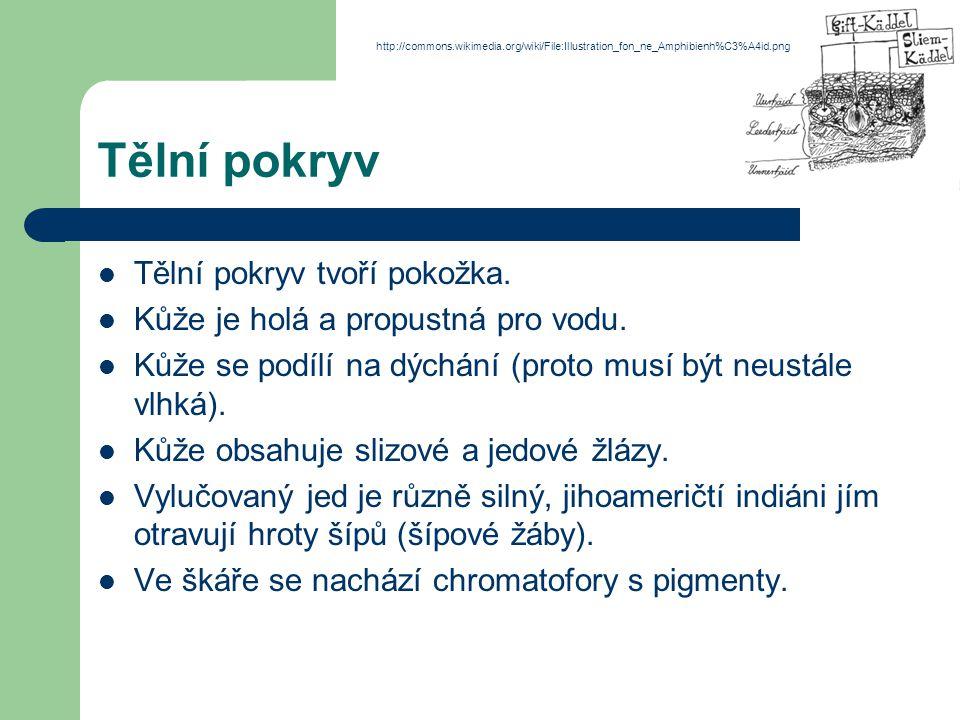 Řád: žáby skokan hnědýskokan zelený http://commons.wikimedia.org/wiki/File:Grasfrosch_auf_Stein.jpg http://commons.wikimedia.org/wiki/File:Teichfrosch.jpg