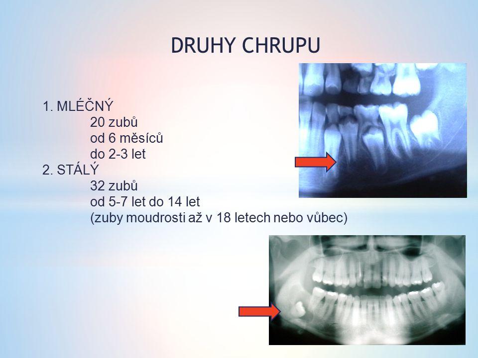 1. MLÉČNÝ 20 zubů od 6 měsíců do 2-3 let 2. STÁLÝ 32 zubů od 5-7 let do 14 let (zuby moudrosti až v 18 letech nebo vůbec) DRUHY CHRUPU