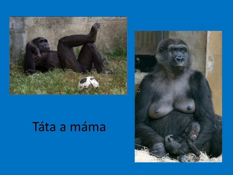 Táta a máma
