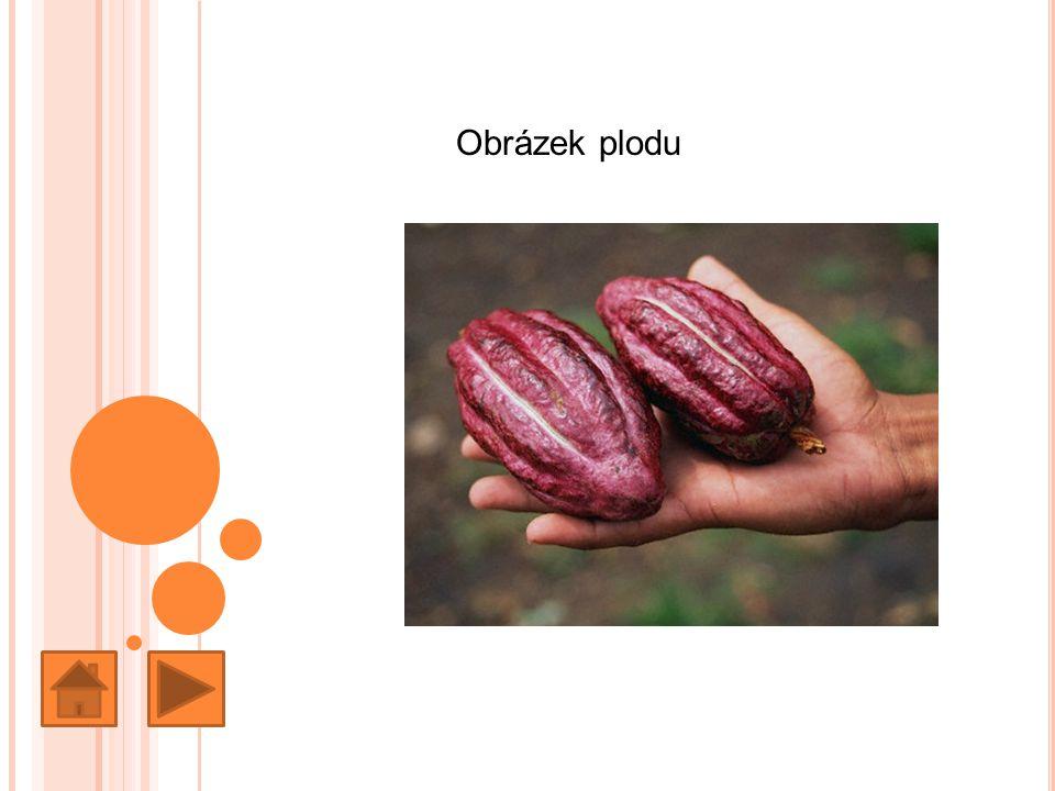 Země původu Kakaovník pochází z údolí Amazonky a byl přenesen do Mexika ještě před objevením Ameriky.
