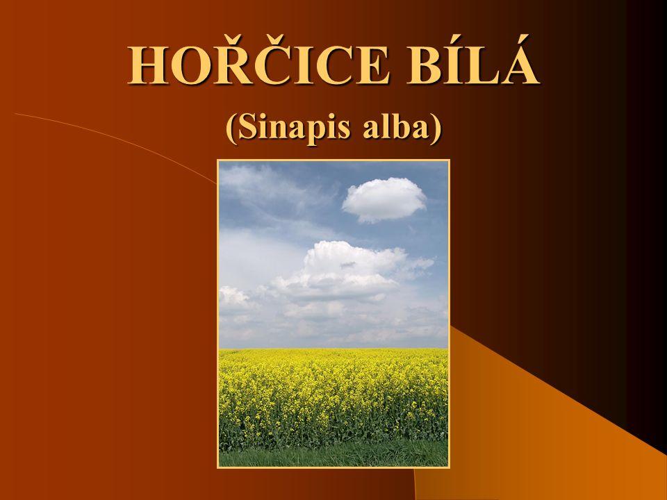 HOŘČICE BÍLÁ (Sinapis alba)