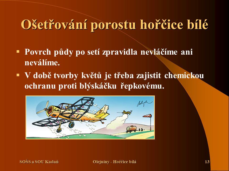 SOŠS a SOU KadaňOlejniny - Hořčice bílá13 Ošetřování porostu hořčice bílé  Povrch půdy po setí zpravidla nevláčíme ani neválíme.