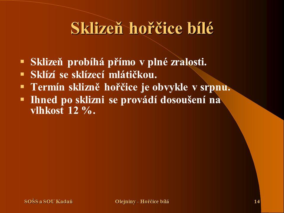 SOŠS a SOU KadaňOlejniny - Hořčice bílá14 Sklizeň hořčice bílé  Sklizeň probíhá přímo v plné zralosti.