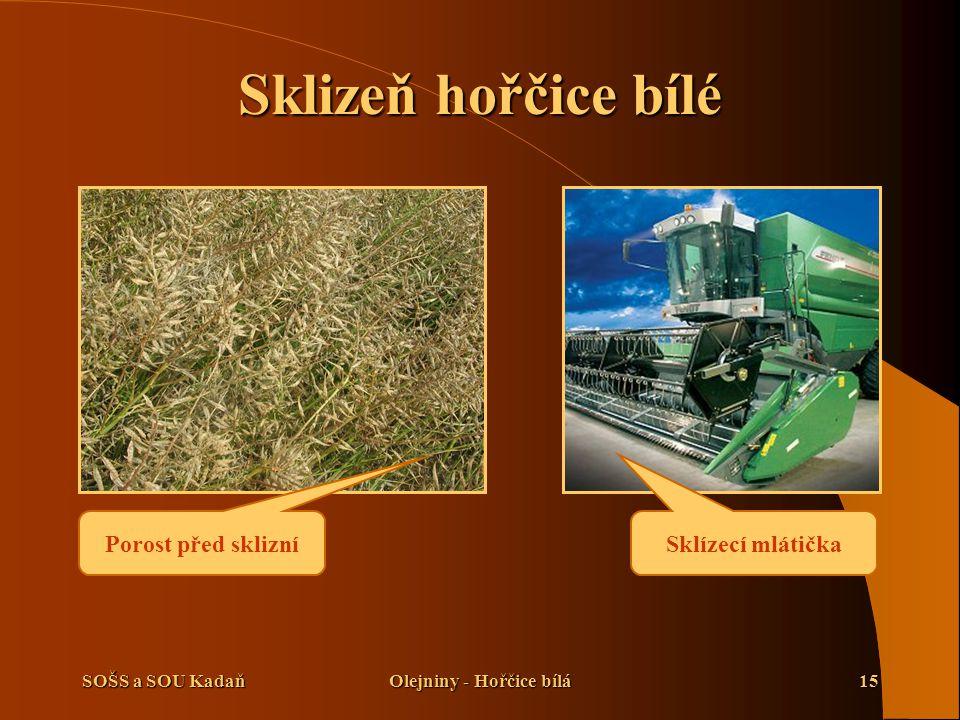 SOŠS a SOU KadaňOlejniny - Hořčice bílá15 Sklizeň hořčice bílé Porost před sklizní Sklízecí mlátička
