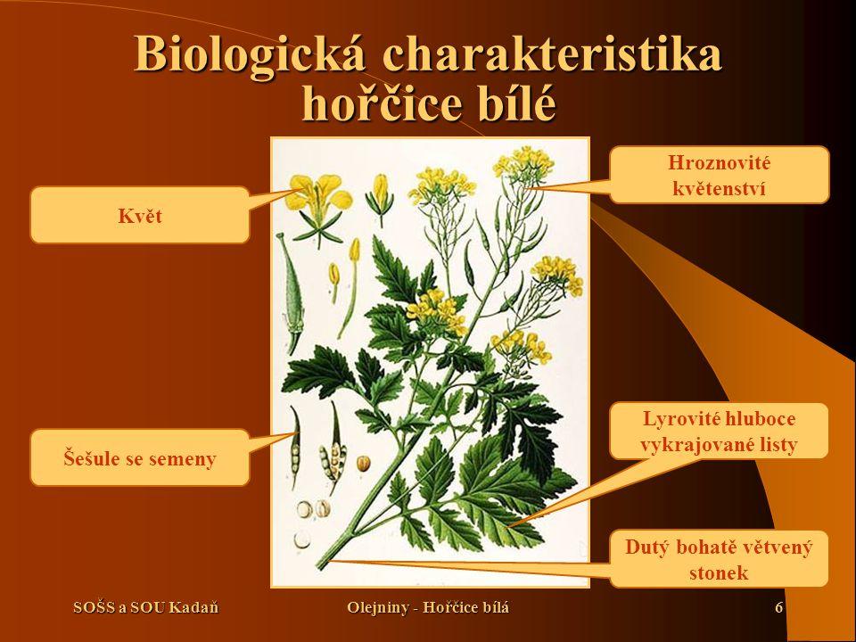SOŠS a SOU KadaňOlejniny - Hořčice bílá17 Použité zdroje  Kuchtík, F., Procházka, I., Teksl, M., Valeš, J.: Pěstování rostlin II.