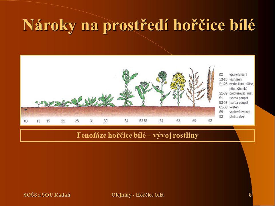 SOŠS a SOU KadaňOlejniny - Hořčice bílá8 Nároky na prostředí hořčice bílé Fenofáze hořčice bílé – vývoj rostliny