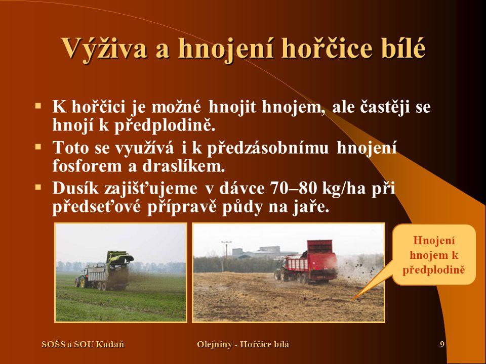 SOŠS a SOU KadaňOlejniny - Hořčice bílá9 Výživa a hnojení hořčice bílé  K hořčici je možné hnojit hnojem, ale častěji se hnojí k předplodině.