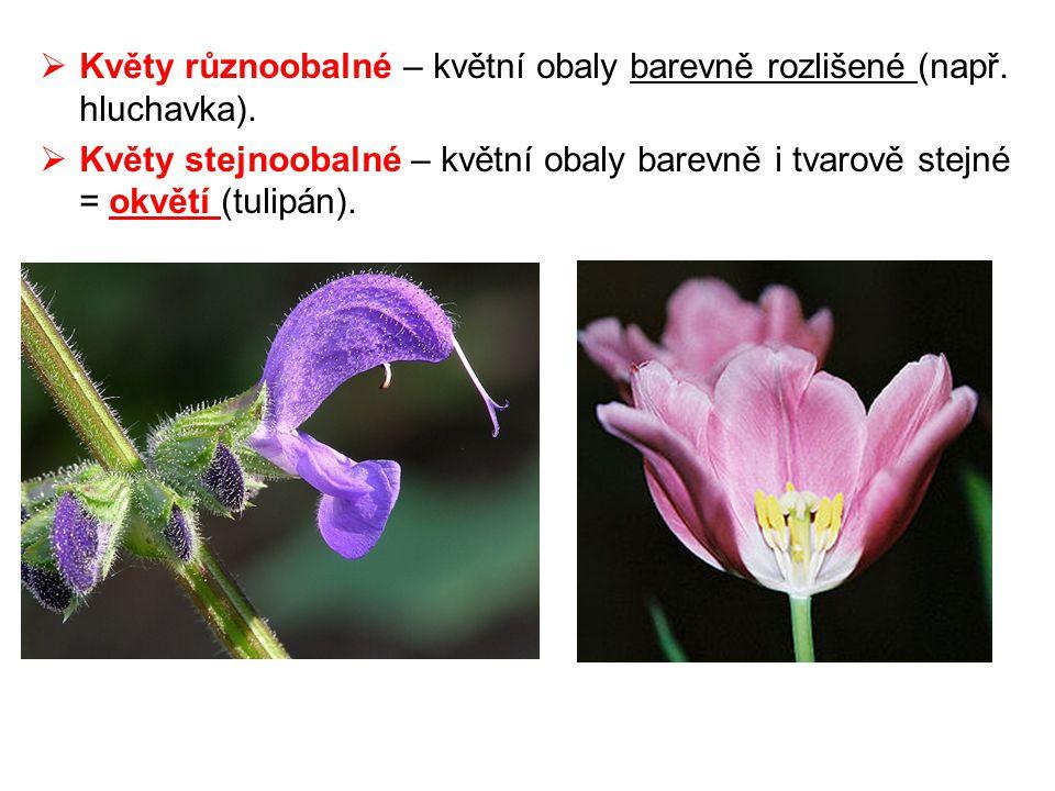  Květy různoobalné – květní obaly barevně rozlišené (např. hluchavka).  Květy stejnoobalné – květní obaly barevně i tvarově stejné = okvětí (tulipán