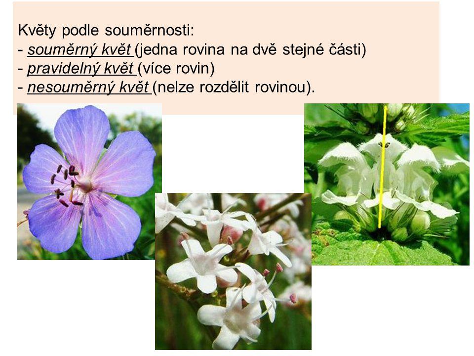 Květy podle souměrnosti: - souměrný květ (jedna rovina na dvě stejné části) - pravidelný květ (více rovin) - nesouměrný květ (nelze rozdělit rovinou).