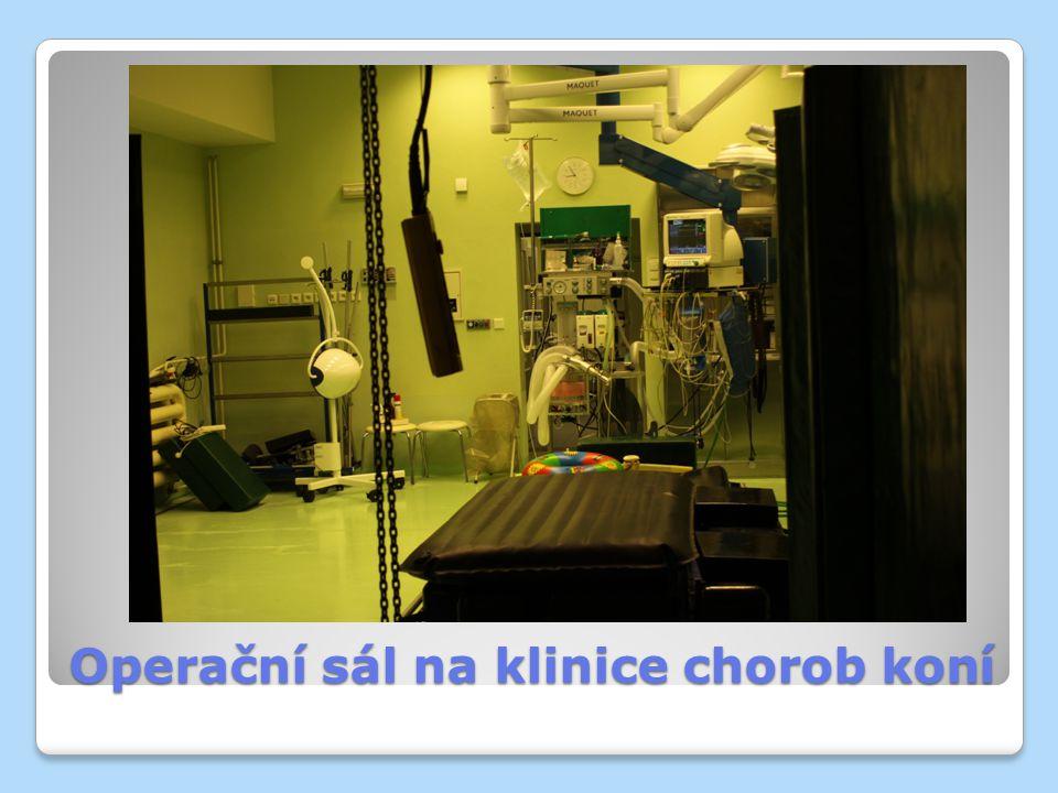 Operační sál na klinice chorob koní