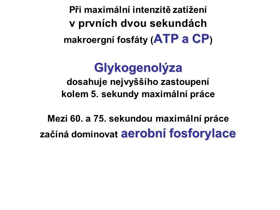 Při maximální intenzitě zatížení v prvních dvou sekundách ATP a CP makroergní fosfáty ( ATP a CP )Glykogenolýza dosahuje nejvyššího zastoupení kolem 5