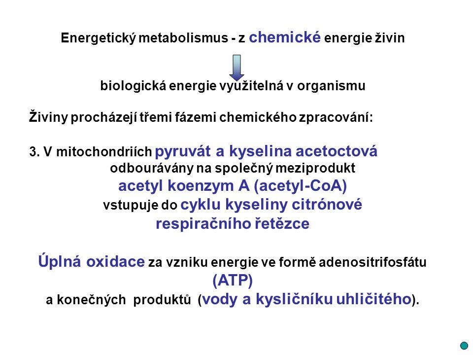 Energetický metabolismus - z chemické energie živin biologická energie využitelná v organismu Živiny procházejí třemi fázemi chemického zpracování: 3.