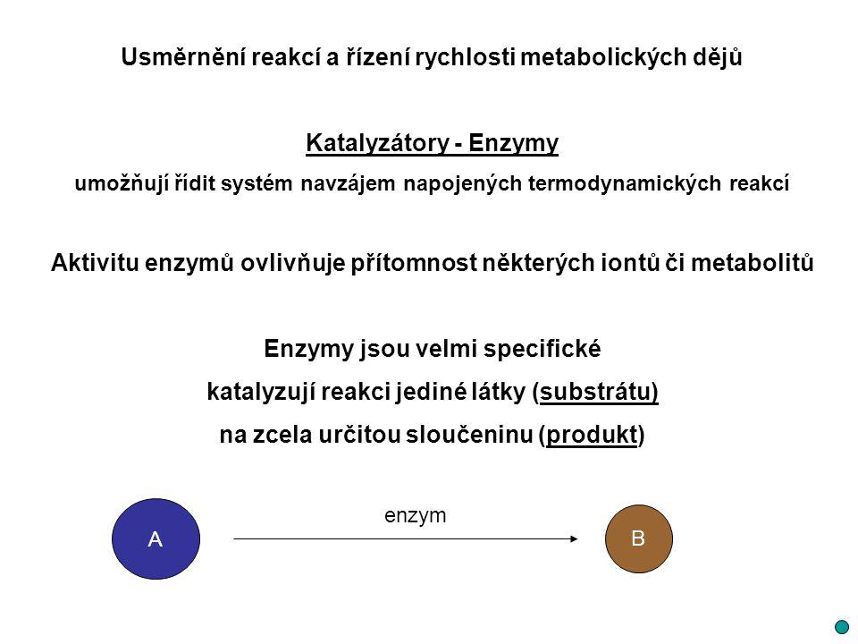 Usměrnění reakcí a řízení rychlosti metabolických dějů Katalyzátory - Enzymy umožňují řídit systém navzájem napojených termodynamických reakcí Aktivit