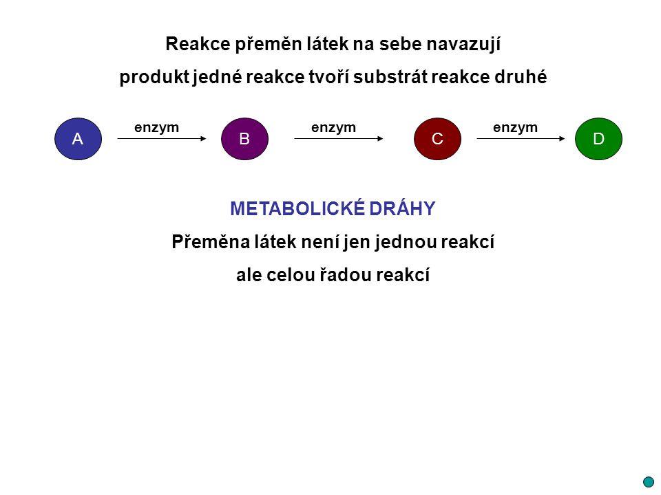 Reakce přeměn látek na sebe navazují produkt jedné reakce tvoří substrát reakce druhé METABOLICKÉ DRÁHY Přeměna látek není jen jednou reakcí ale celou