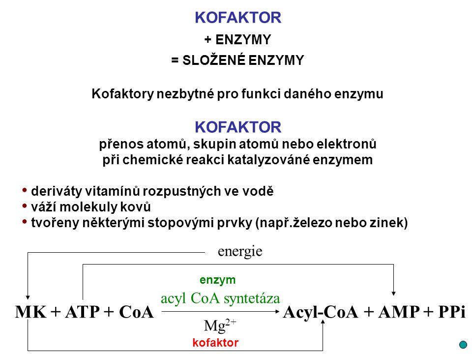 KOFAKTOR + ENZYMY = SLOŽENÉ ENZYMY Kofaktory nezbytné pro funkci daného enzymu KOFAKTOR přenos atomů, skupin atomů nebo elektronů při chemické reakci
